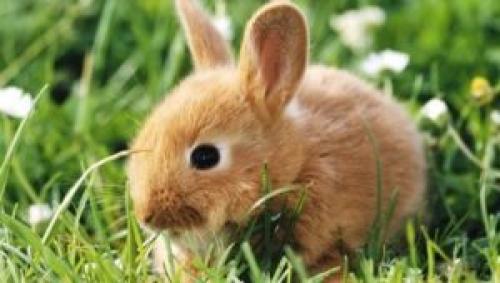 Ивермектин для кроликов. Дозировки лекарства Ивермек