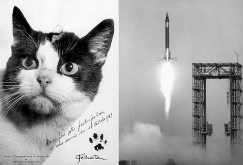 В день старта Феликс сбежал, поэтому в космос полетела Фелисетт - первая кошка-космонавт