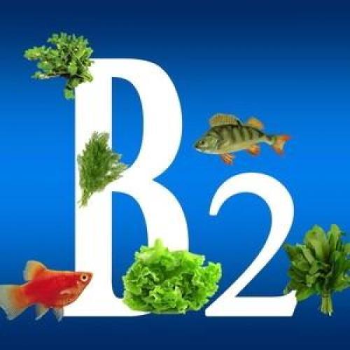 Самые важные витамины для человека. Жизненно ответственные витамины для здоровья человека: рибофлавин
