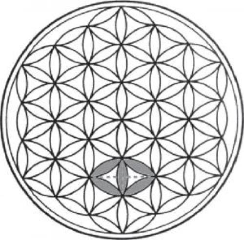Цветок жизни. Синтез математических формул
