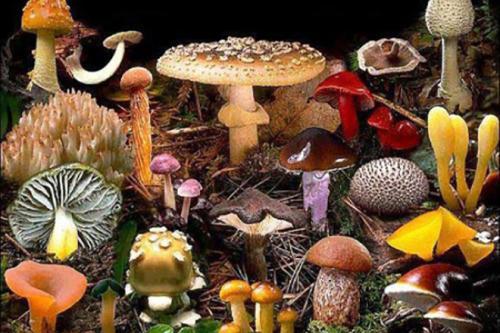 Интересное про грибы. Интересные факты о грибах