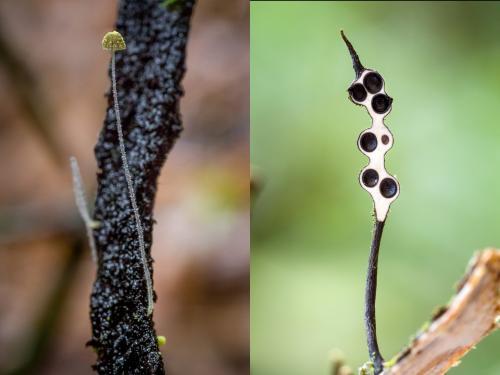 Грибы в тропиках. Фотографии редких и неизвестных грибов в тропических лесах Эквадора