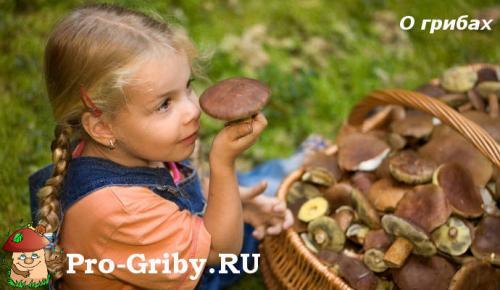 Сообщение про грибы. О грибах