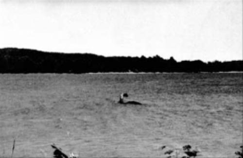 Чудовище шамп. Шамп – загадочное чудовище озера Шамплейн
