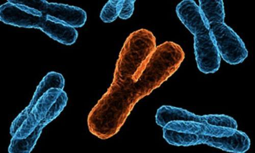 Интересные факты о хромосомах. Хромосомы человека