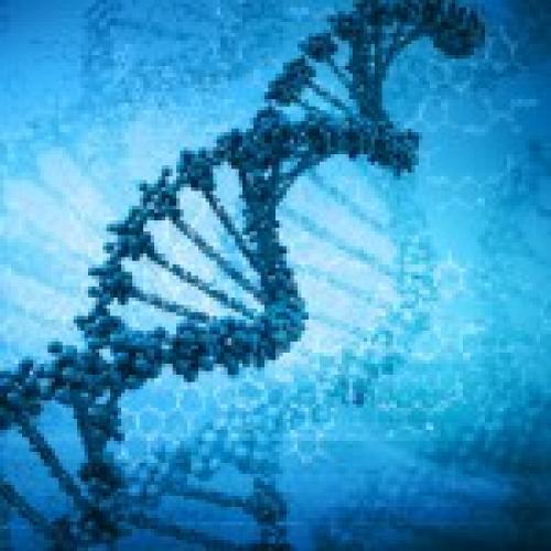 Интересные факты о нуклеиновых кислотах. Интересные факты о ДНК