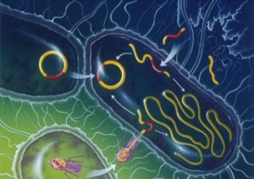 Интересные факты о ДНК человека. 23 интересных факта о ДНК