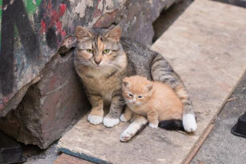 Коронавирус в Москве. В Москве убьют тысячи кошек и собак из-за коронавируса