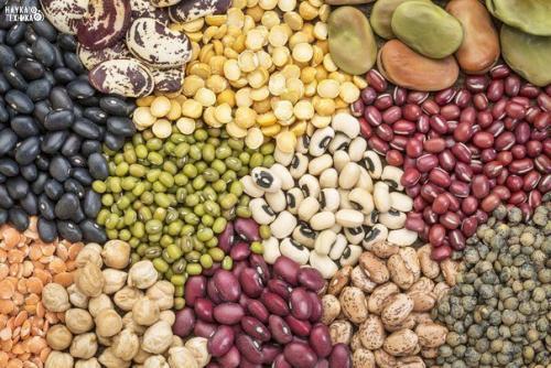 10 самых полезных продуктов на Земле?
