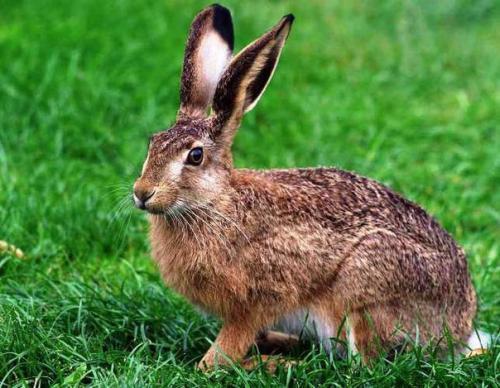 Факты о зайцах, которых вы наверняка не знали.