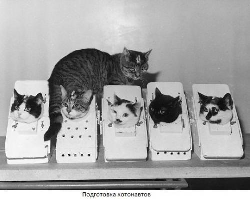 Животные в космосе: кошка фелисетта.