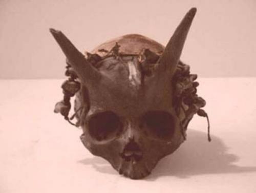 Спорные артефакты. Этот череп был обнаружен во Франции между 1920 и 1940 годами и являлся одним из самых спорных артефактов того времени.