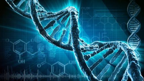 Интересные факты о ДНК. Интересные факты про ДНК, которые вы могли не знать.