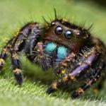 Почему паук не насекомое?