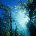 Ученые выяснили, что количество тепловых волн, воздействующих на океаны планеты, резко возросло.