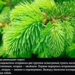 9 природных ароматов, неожиданно меняющие эмоции человека.
