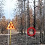 То, что ученые обнаружили в чернобыльском лесу, шокировало весь мир!