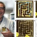 В 2000 году японский учёный тошуки накагаки провёл интересный эксперимент.