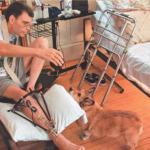 В 1999 году Стивена кинга сбила машина.