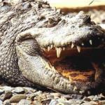 Лютые звери и крокодилы русских летописей.