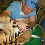 Настоящий айболит.  Герхард стинкамп - стоматолог для животных.
