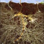 Существует мнение, что грибы имеют космическое, а не земное происхождение.