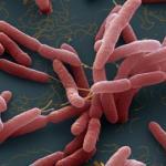 Из тропиков выходит новая смертельная инфекция - мелиоидоз.