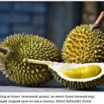 10 самых экзотических фруктов, которые должен попробовать каждый.