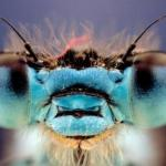 Вы не поверите, но эти 10 насекомых являются съедобными поделитьсярассказать возможно, вы не поверите, но насекомые съедобны.