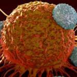 Метод дистанционной иммунотерапии рака открыт.