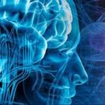 Лекции по нейрофизиологии.
