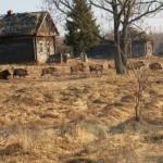Чернобыль превратят в заповедник дикой природы.