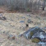 Лабиринты куркиёки.   В Карелии есть местечко куркиёки, поблизости от которого находится каменный лабиринт.