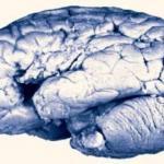 О повреждениях мозга и бранных словах.