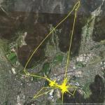 В австралийском городе литгоу провели эксперимент, и надели нескольким котам ошейники с GPS передатчиками, чтобы узнать, где они гуляют ночами.