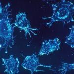 Как возникают раковые клетки?