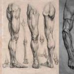 Академический рисунок ног и рук.