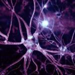 Медики научились восстанавливать нервные клетки.