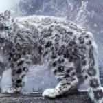 Кошки, находящиеся на грани вымирания.