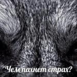 Любопытная статья о том, чем пахнет страх?
