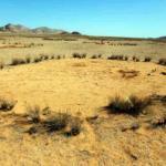 """Тайна волшебных кругов """" в Намибии разгадана?"""