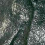 Отпечаток человеческой ноги возрастом 290 миллионов лет.