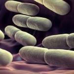 В кишечнике человека живут неизвестные науке формы жизни.