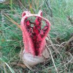 Пальцы дьявола - самый жуткий в мире гриб.