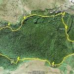 Аномальный лес хойя - бачу в Румынии.