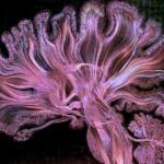 Так выглядит взаимодействие примерно 500 тыс из 100 млрд нейронов нашего мозга.