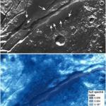 Станция New Horizons на поверхности Плутона аммиак нашла.