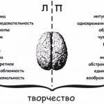 Мы развиваем мозг: различие полушарий мозга.