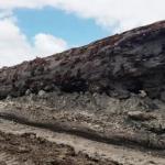 В новой Зеландии обнаружили дерево, пережившее инверсию магнитного поля земли.
