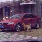 Бродячие собаки автовладельцу отомстили.